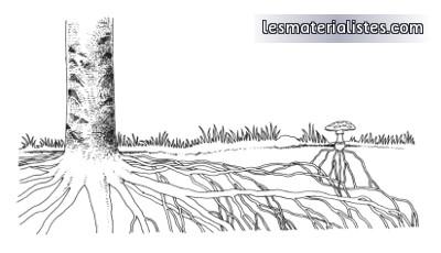 Dessin schématique d'une symbiose mycorhizienne