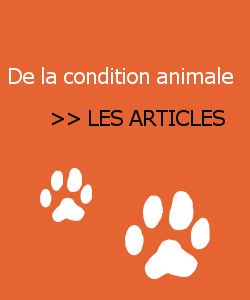 Liste des articles sur la grande question : De la condition animale